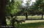 all paddocks with beautiful shade trees