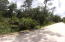3 wooded lots