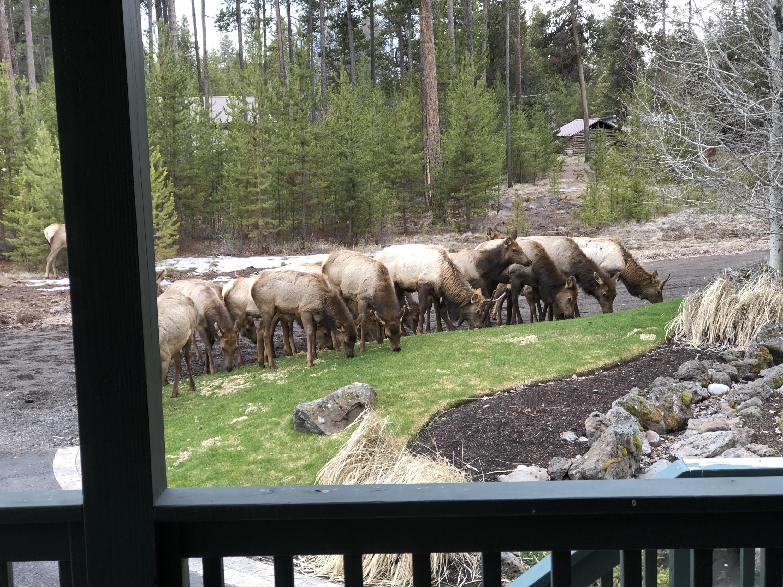 22. Elk Front yard