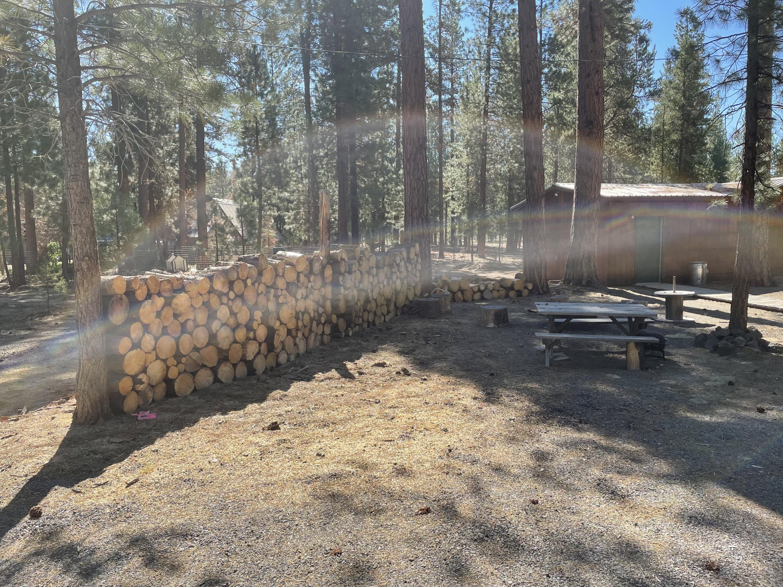 15057 Yorkie fire wood 1