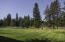 Beautiful expansive lawn with National Forest in the background