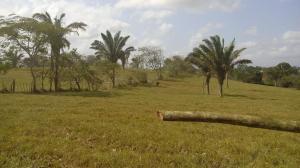 Terreno En Ventaen Panama Oeste, Arraijan, Panama, PA RAH: 16-713