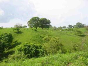 Terreno En Ventaen Pedasi, Pedasi, Panama, PA RAH: 16-2046