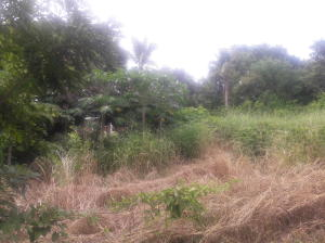 Terreno En Ventaen La Chorrera, Chorrera, Panama, PA RAH: 16-2610