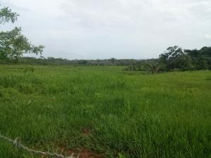 Terreno En Ventaen La Chorrera, Chorrera, Panama, PA RAH: 16-2736