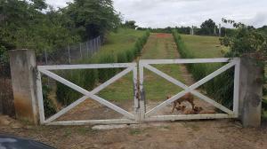 Terreno En Ventaen San Carlos, San Carlos, Panama, PA RAH: 17-974