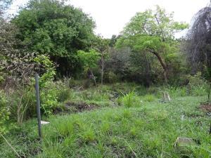 Terreno En Ventaen San Carlos, San Carlos, Panama, PA RAH: 17-2398