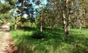 Terreno En Alquileren Bocas Del Toro, Bocas Del Toro, Panama, PA RAH: 17-6391