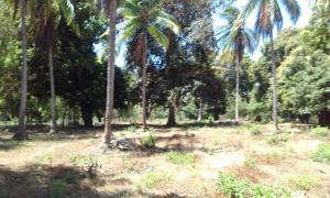 Terreno En Ventaen Chitré, Chitré, Panama, PA RAH: 18-1501