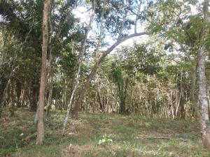 Terreno En Ventaen La Chorrera, Chorrera, Panama, PA RAH: 18-1732