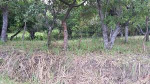 Terreno En Ventaen San Carlos, San Carlos, Panama, PA RAH: 18-2334