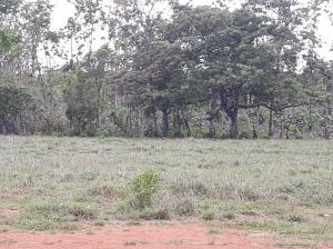 Terreno En Ventaen David, David, Panama, PA RAH: 18-2968
