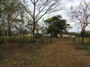 Terreno En Ventaen La Chorrera, Chorrera, Panama, PA RAH: 18-3161