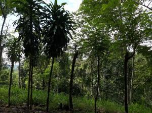 Terreno En Ventaen Baru, Progreso, Panama, PA RAH: 18-3745