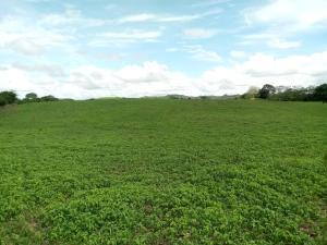 Terreno En Ventaen Pedasi, Pedasi, Panama, PA RAH: 18-3589
