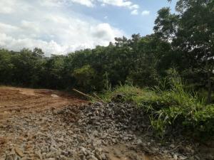Terreno En Alquileren La Chorrera, Chorrera, Panama, PA RAH: 18-4310