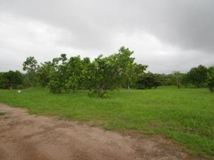 Terreno En Ventaen San Carlos, San Carlos, Panama, PA RAH: 18-4324