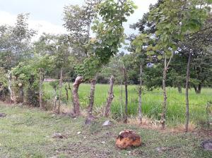 Terreno En Ventaen David, David, Panama, PA RAH: 18-5941