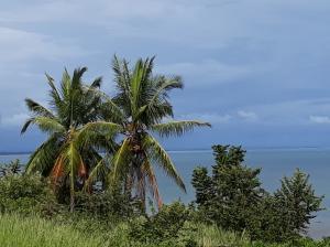 Terreno En Ventaen Baru, Limones, Panama, PA RAH: 18-8337
