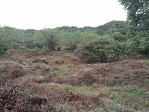 Terreno En Ventaen Penonome, El Coco, Panama, PA RAH: 18-8442