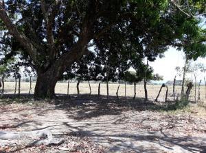 Terreno En Ventaen San Felix, Lajas Adentro, Panama, PA RAH: 19-4812