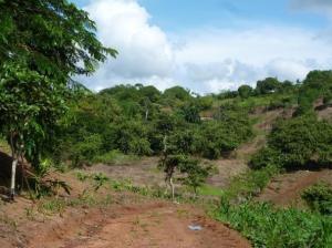Terreno En Ventaen La Chorrera, Chorrera, Panama, PA RAH: 19-2319