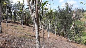 Terreno En Ventaen Renacimiento, Rio Sereno, Panama, PA RAH: 19-3277