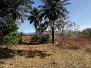 Terreno En Ventaen Dolega, Dolega, Panama, PA RAH: 19-2813