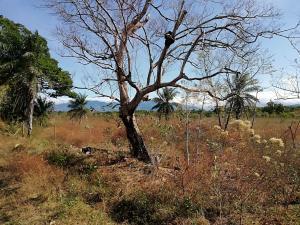 Terreno En Ventaen Dolega, Dolega, Panama, PA RAH: 19-2816