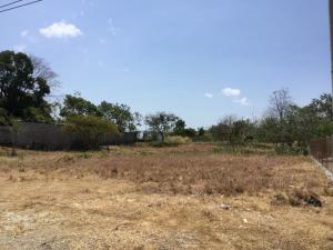Terreno En Ventaen Penonome, El Coco, Panama, PA RAH: 19-3101
