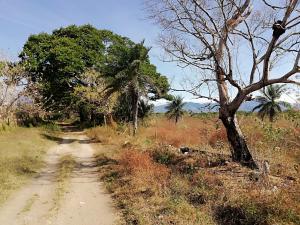 Terreno En Alquileren Dolega, Dolega, Panama, PA RAH: 19-4010