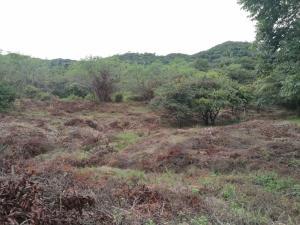 Terreno En Ventaen Penonome, El Coco, Panama, PA RAH: 19-4613