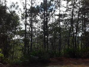 Terreno En Alquileren Pacora, Cerro Azul, Panama, PA RAH: 19-4774