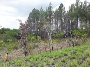 Terreno En Ventaen San Carlos, San Carlos, Panama, PA RAH: 19-5022