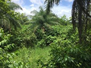 Terreno En Ventaen David, David, Panama, PA RAH: 19-6179