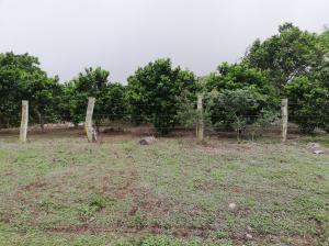 Terreno En Ventaen Dolega, Rovira, Panama, PA RAH: 19-7380