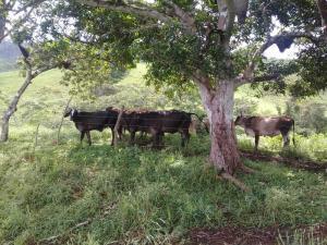Terreno En Ventaen Panama Oeste, Capira, Panama, PA RAH: 19-8075