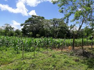 Terreno En Ventaen Chepo, Las Margaritas, Panama, PA RAH: 19-8331