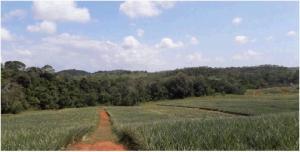 Terreno En Ventaen La Chorrera, Chorrera, Panama, PA RAH: 19-8566