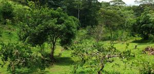 Terreno En Alquileren Panama Oeste, Capira, Panama, PA RAH: 19-9316