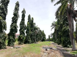 Terreno En Ventaen Chame, Las Lajas, Panama, PA RAH: 19-9766