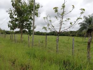 Terreno En Ventaen David, David, Panama, PA RAH: 19-12332