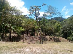 Terreno En Ventaen Chame, Sora, Panama, PA RAH: 19-12354