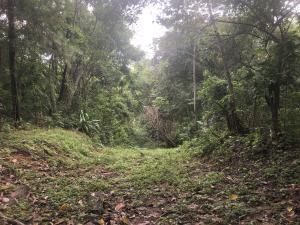 Terreno En Ventaen Panama, Las Cumbres, Panama, PA RAH: 20-8
