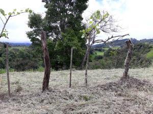Terreno En Ventaen Tierras Altas, Volcan, Panama, PA RAH: 20-549