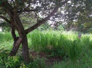 Terreno En Ventaen Chame, Coronado, Panama, PA RAH: 20-961