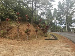 Terreno En Ventaen Pacora, Cerro Azul, Panama, PA RAH: 20-1108