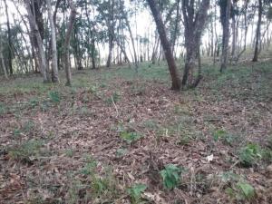 Terreno En Ventaen La Chorrera, Chorrera, Panama, PA RAH: 20-1790