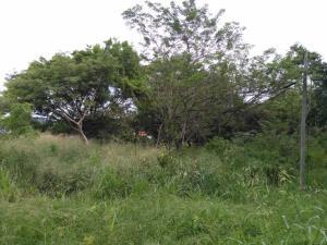 Terreno En Ventaen Penonome, El Coco, Panama, PA RAH: 20-2423