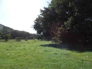 Terreno En Alquileren Arraijan, Cocoli, Panama, PA RAH: 20-2868